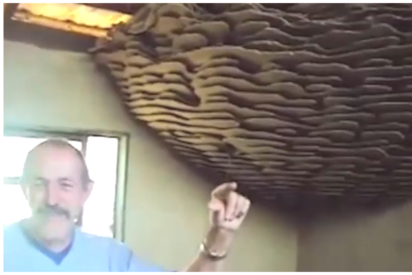 Huge Wasp Nest Found in Abandoned Farmhouse